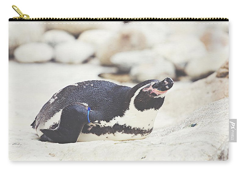 Bird Carry-all Pouch featuring the photograph Resting Penguin by Pati Photography