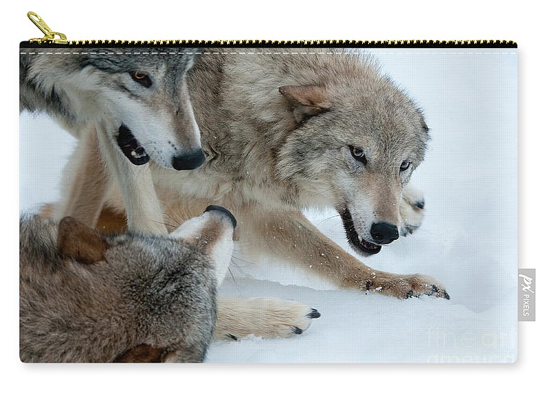 Wolves Carry-all Pouch featuring the photograph Right Of Passage by Sandra Bronstein