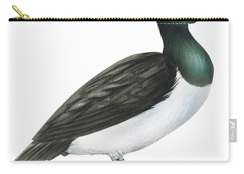 No People; Horizontal; Full Length; White Background; Standing; One Animal; Animal Themes; Illustration And Painting; Ring-necked Duck; Aythya Collaris; Duck; Bird; Aquatic Carry-all Pouch featuring the drawing Ring-necked Duck by Anonymous