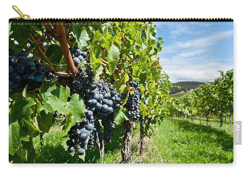 Agriculture Carry-all Pouch featuring the photograph Ripe Grapes Right Before Harvest In The Summer Sun by U Schade