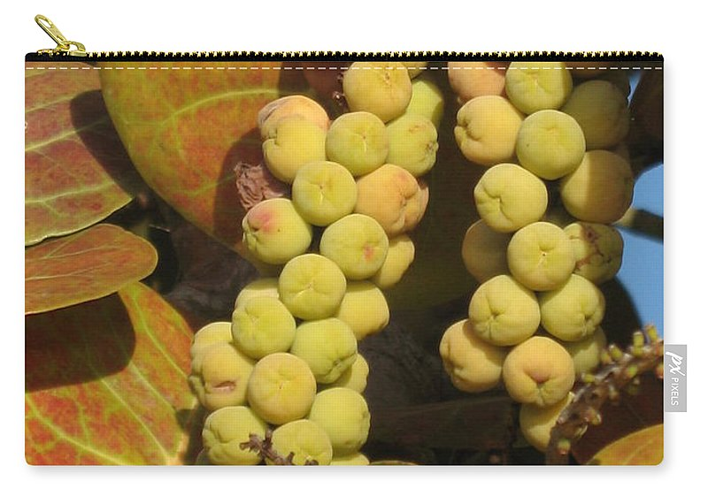 Seagrapes Carry-all Pouch featuring the photograph Ripe Seagrapes by Christiane Schulze Art And Photography