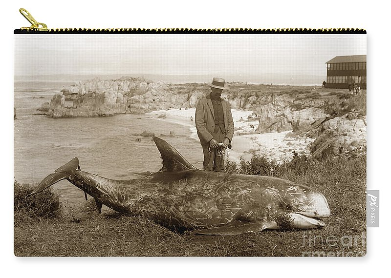 Rissos Dolphin Carry-all Pouch featuring the photograph Rissos Dolphin Grampus Griseus Circa 1892 by California Views Archives Mr Pat Hathaway Archives