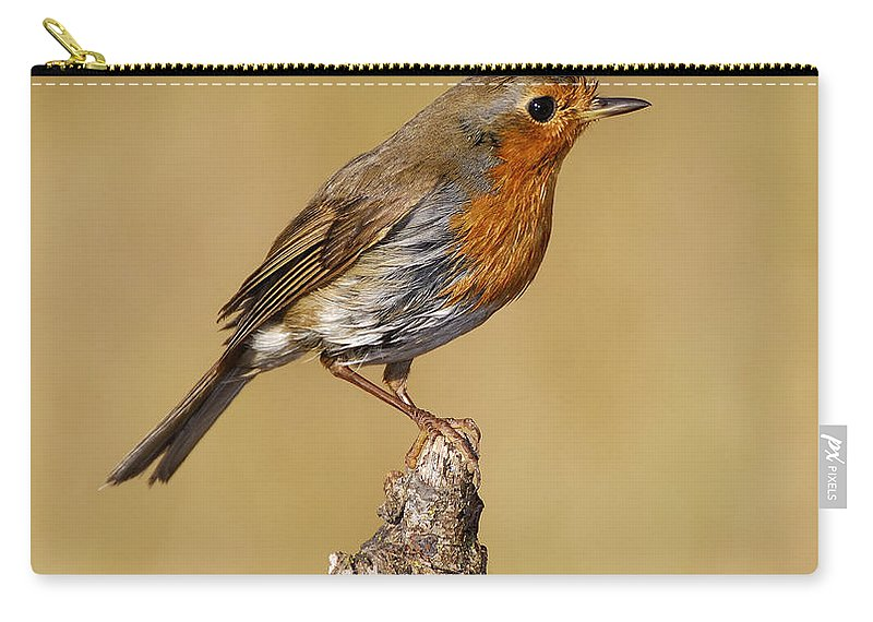Birds Carry-all Pouch featuring the photograph Robin After Taking A Bath by Guido Montanes Castillo