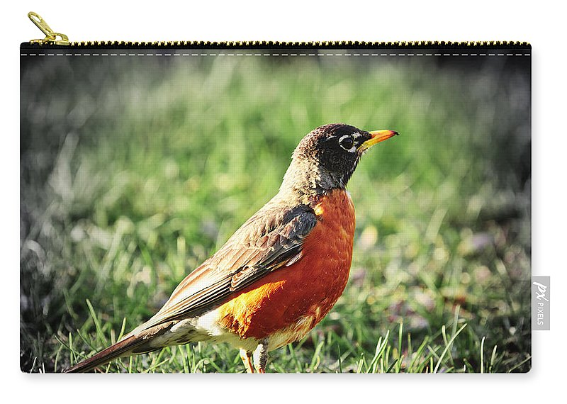 Robin Carry-all Pouch featuring the photograph Robin by Elena Elisseeva