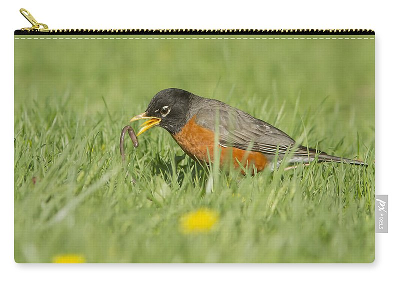 American Carry-all Pouch featuring the photograph Robin Vs Worm by Mircea Costina Photography