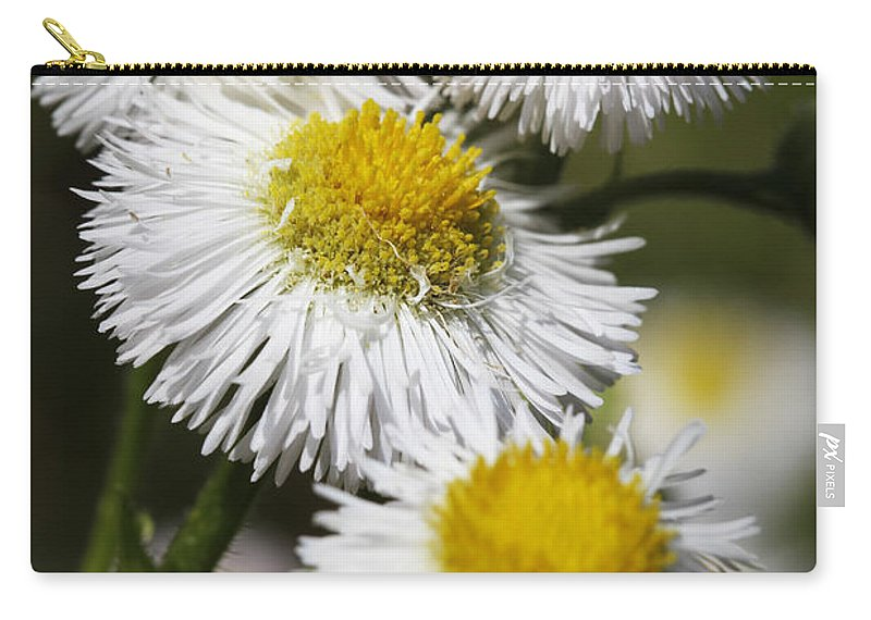 Robin's Plantain Carry-all Pouch featuring the photograph Robin's Plantain Wildflowers - Erigeron Pulchellus by Kathy Clark