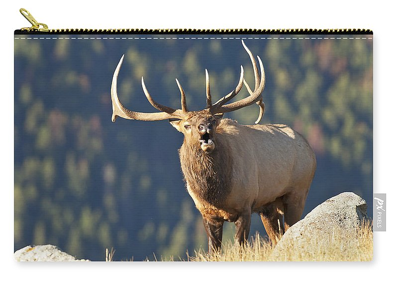 Rocky Mountain Bull Elk Bugling Carry-all Pouch featuring the photograph Rocky Mountain Bull Elk Bugling by Gary Langley