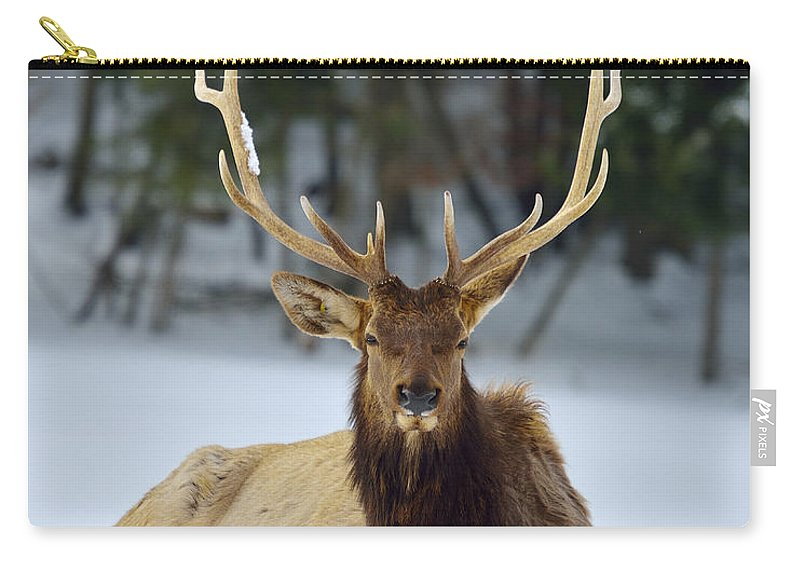 Elk Carry-all Pouch featuring the photograph Rocky Mountain Elk by Joshua McCullough
