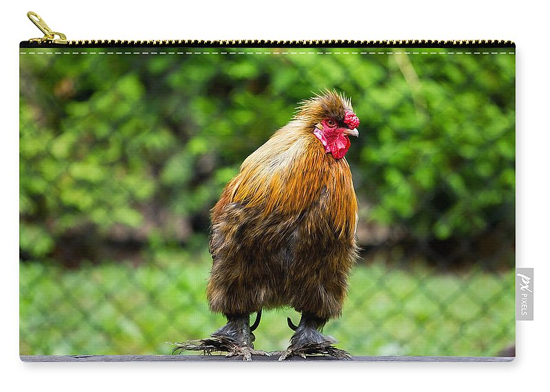 Good Morning Carry-all Pouch featuring the photograph Rooster by Pati Photography