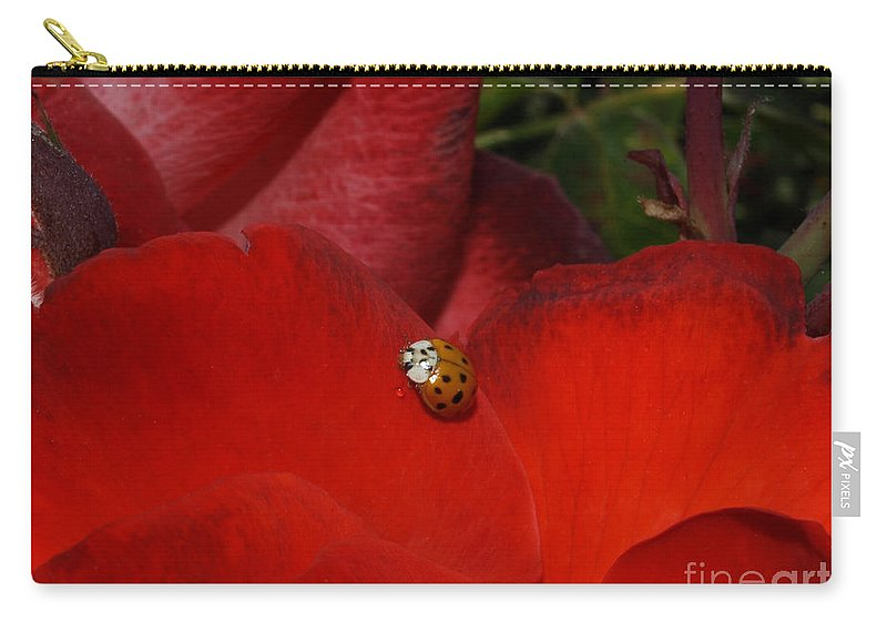 Ladybug Carry-all Pouch featuring the photograph Rose And Ladybug by Jacklyn Duryea Fraizer