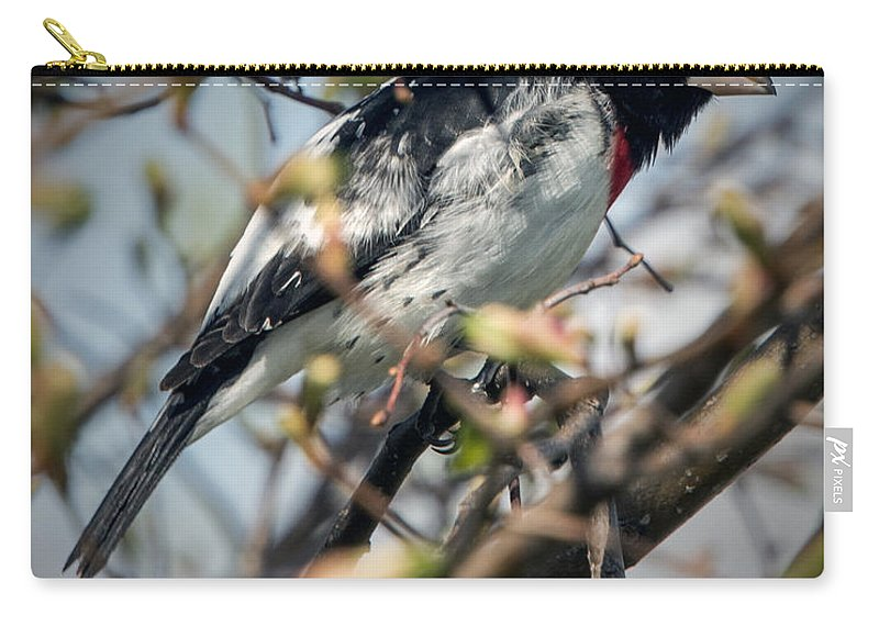 Grosbeak Carry-all Pouch featuring the photograph Rose Breasted Grosbeak by Jayne Gohr