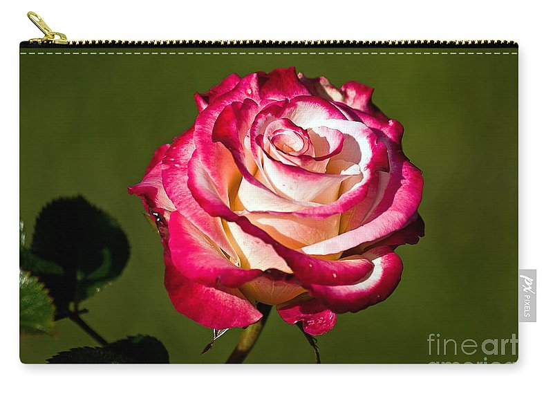 Kate Brown Carry-all Pouch featuring the photograph Rose Dick Clark by Kate Brown