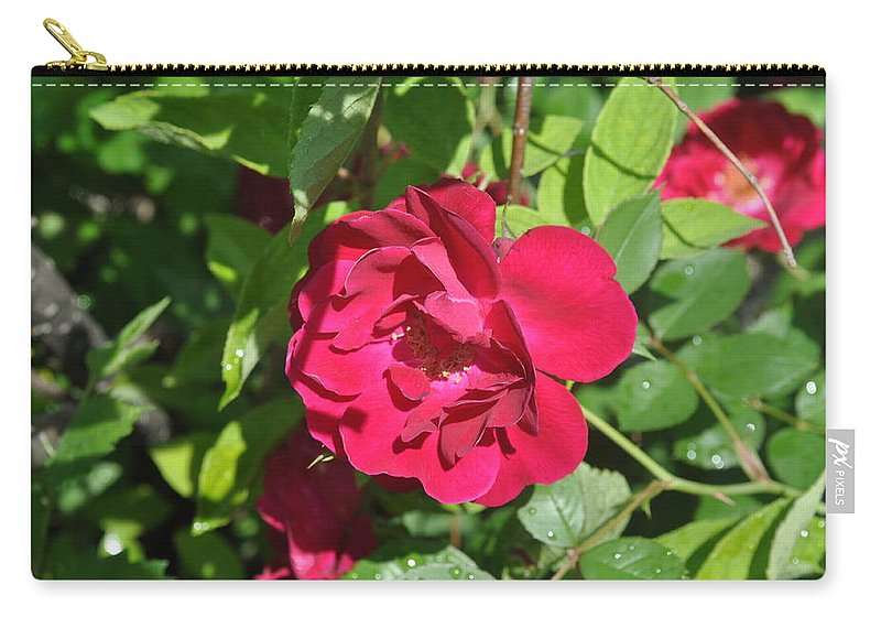 Rose Carry-all Pouch featuring the photograph Rose On The Vine by Verana Stark