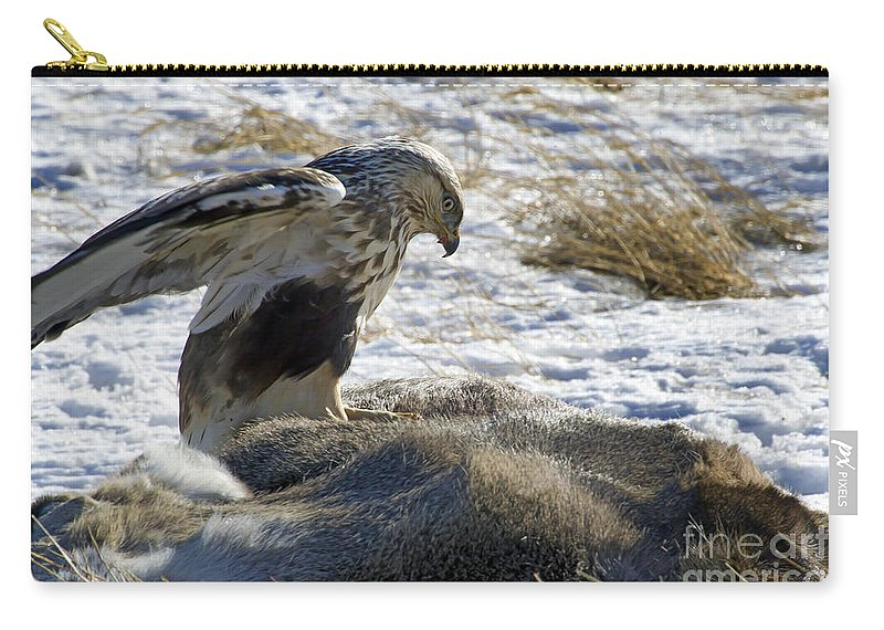 Bird Carry-all Pouch featuring the photograph Rough-legged Hawk On A Mule Deer Kill by J L Woody Wooden
