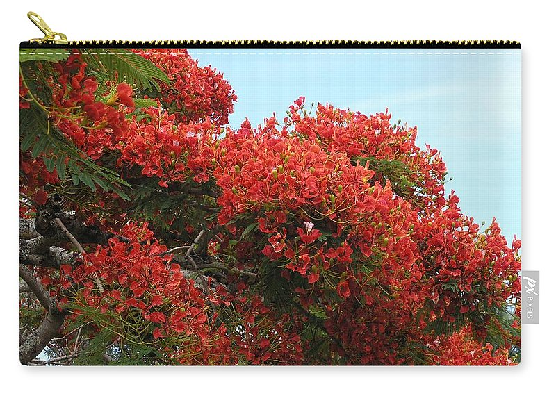 Trees Carry-all Pouch featuring the photograph Royal Poinciana Branch by Mary Deal