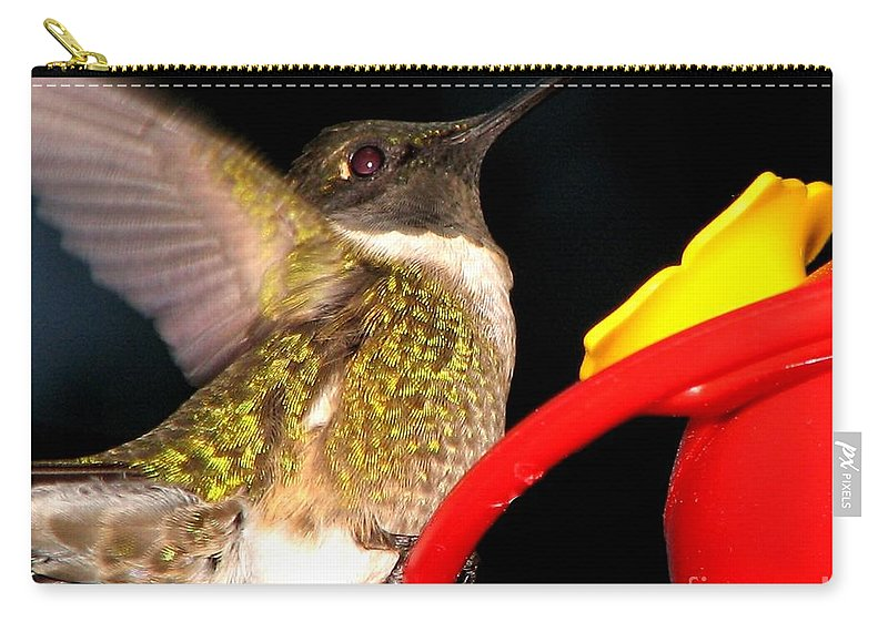 Ruby-throated Hummingbird Carry-all Pouch featuring the photograph Ruby-throated Hummingbird Landing On Feeder by Rose Santuci-Sofranko