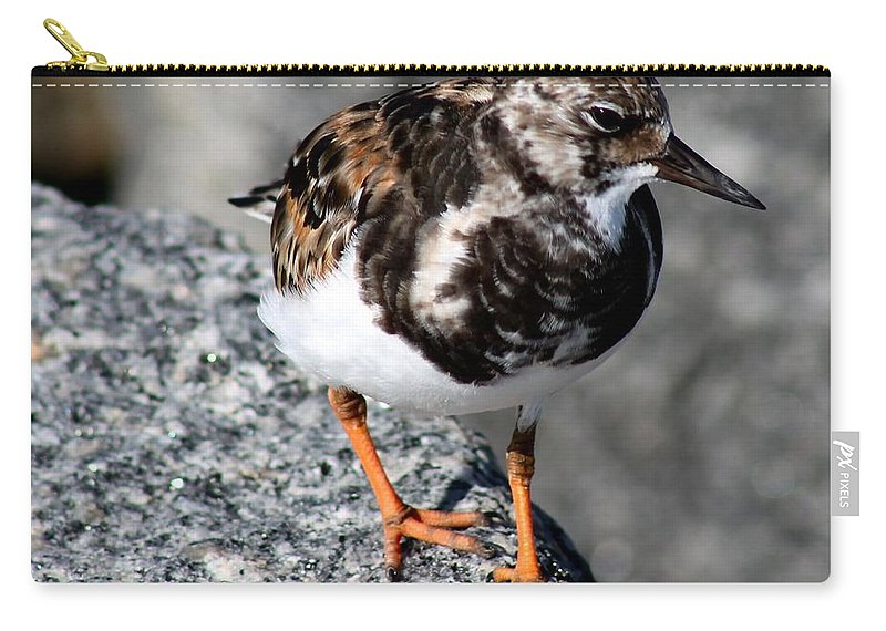 Bird Carry-all Pouch featuring the photograph Ruddy Makes For The Rocks by Patricia Twardzik