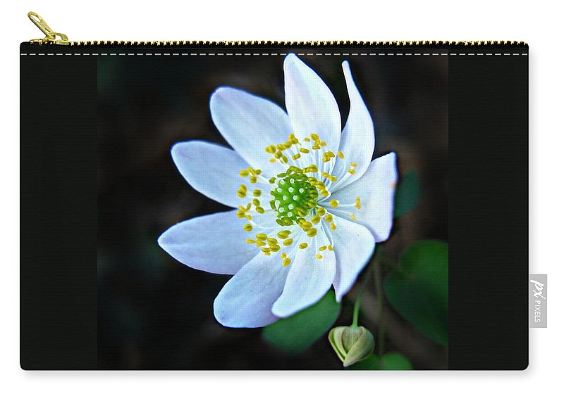 Anemonella Thalictroides Carry-all Pouch featuring the photograph Rue Anemone by William Tanneberger