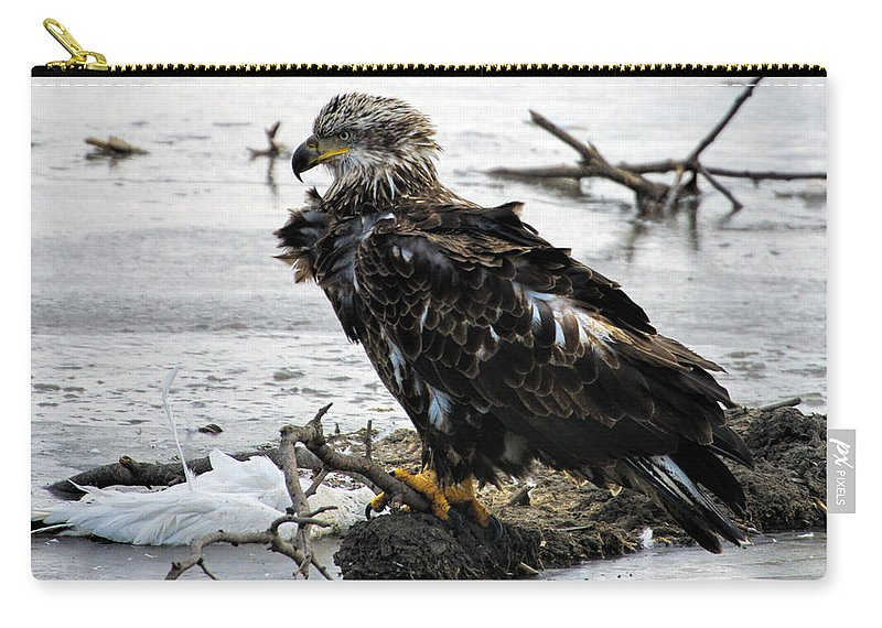 Bald Eagle Carry-all Pouch featuring the photograph Ruffled Feathers by Alan Hutchins