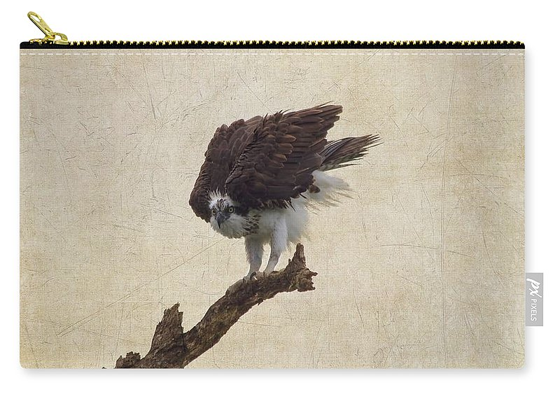 Osprey Carry-all Pouch featuring the photograph Ruffled Up Osprey by Kim Hojnacki