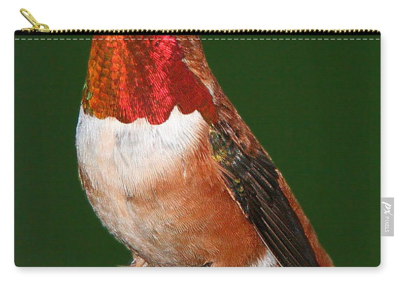 Hummingbird Carry-all Pouch featuring the photograph Rufous Hummingbird by Paul DeRocker
