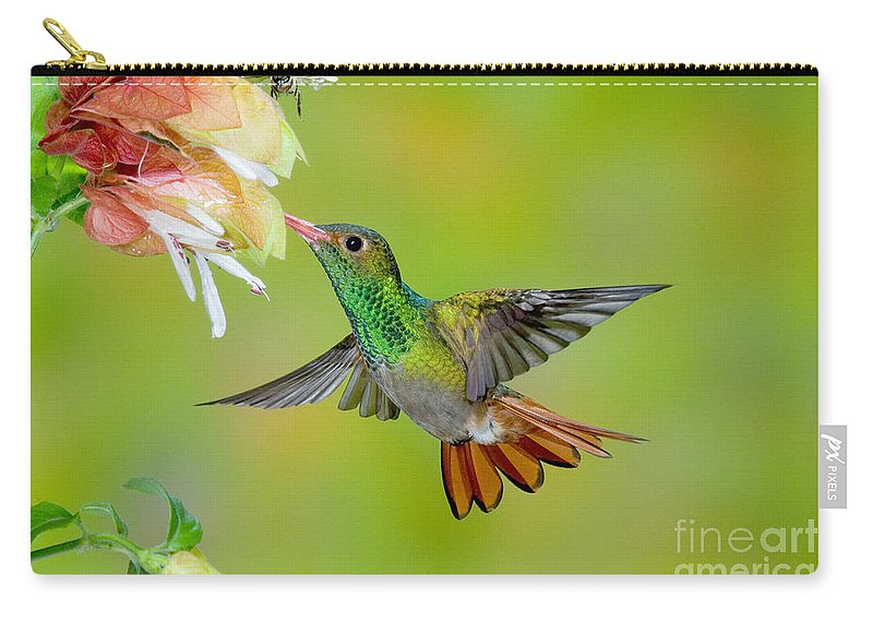 Fauna Carry-all Pouch featuring the photograph Rufous-tailed Hummingbird by Anthony Mercieca