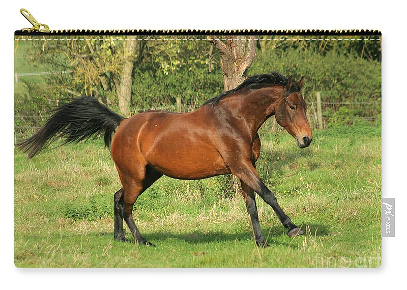Horse Carry-all Pouch featuring the photograph Run Run by Angel Ciesniarska