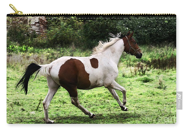 Pinto Carry-all Pouch featuring the photograph Running Pinto Horse by Angel Tarantella