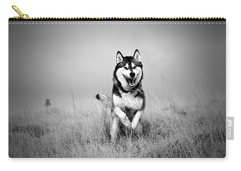 Action Carry-all Pouch featuring the photograph Running Wolf by Mike Taylor