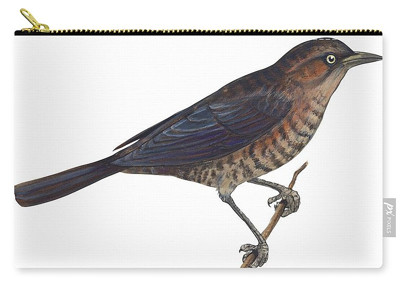No People; Horizontal; Studio Shot; Side View; Close-up; Full Length; White Background; One Animal; Animal Themes; Nature; Wildlife; Illustration; Zoology; Rusty Blackbird; Perching; Twig; Biology; Euphagus Carolinus; Bird Carry-all Pouch featuring the drawing Rusty Blackbird by Anonymous