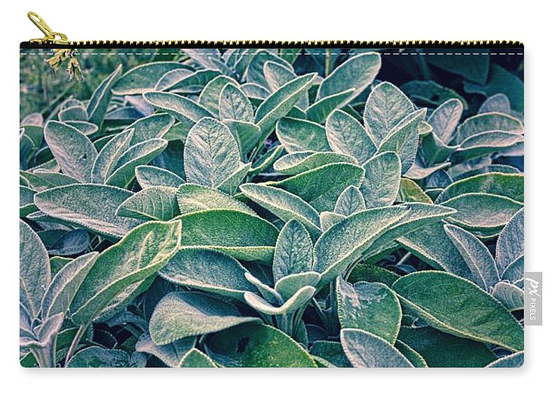 Sage Leaf Carry-all Pouch featuring the photograph Sage In The Garden by Michelle Calkins