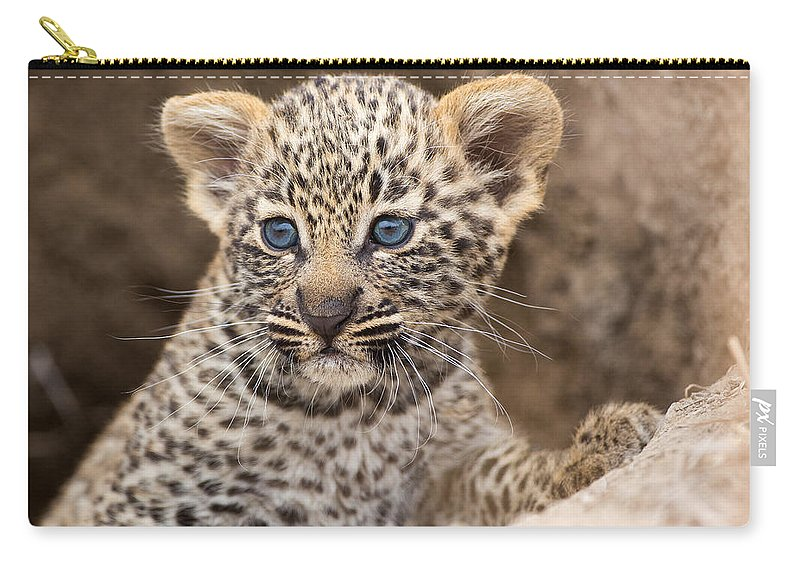 Africa Carry-all Pouch featuring the photograph Salayexe's Cub by Max Waugh
