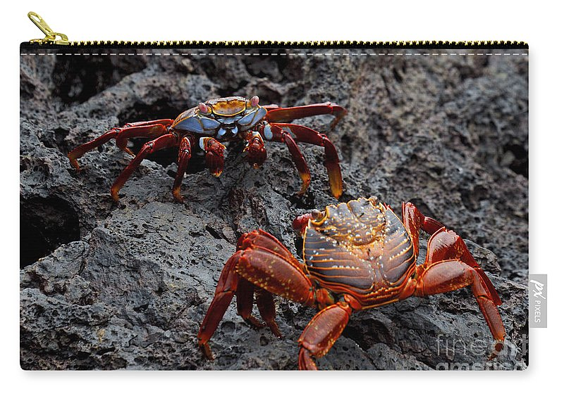 Sally Lightfoot Crab Carry-all Pouch featuring the photograph Sally Light Foot Crabs Galapagos by Jason O Watson