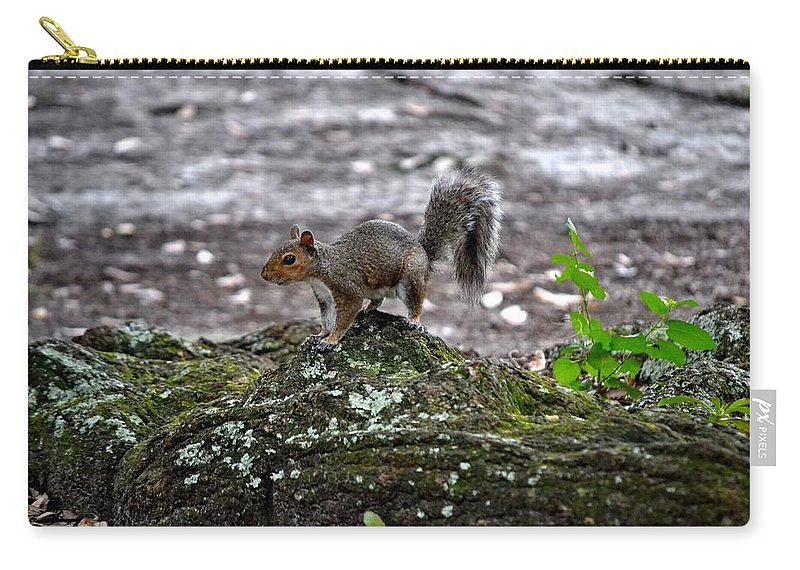 Squirrel Carry-all Pouch featuring the photograph Savannah Squirrel by Tara Potts