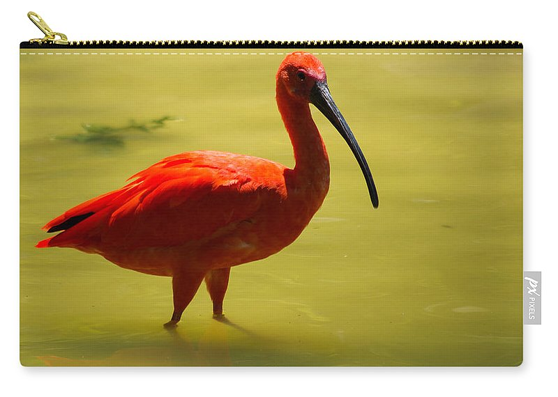 Texas Carry-all Pouch featuring the photograph Scarlet Ibis by JG Thompson