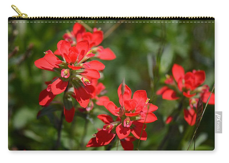Indian Paintbrush Carry-all Pouch featuring the photograph Scarlet Paintbrush. Texas Wildflowers. Castilleja_indivisa by Connie Fox