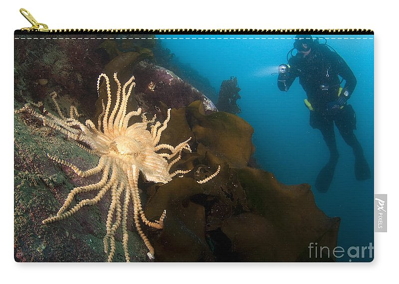 Antarctic Carry-all Pouch featuring the photograph Scientific Diver Looks On At A Giant by Steve Jones