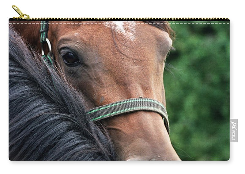 Horse Portrait Carry-all Pouch featuring the photograph Scratch My Back by Angel Ciesniarska