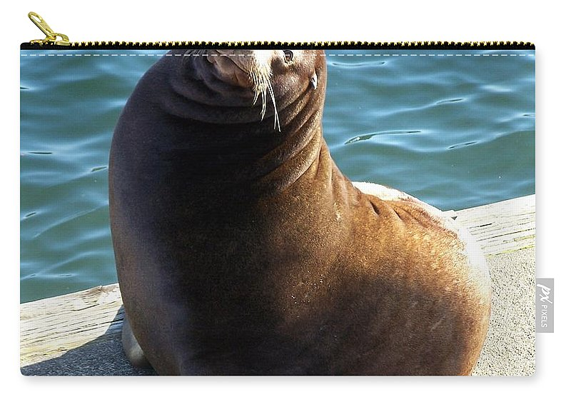 Sea Lion Basking In The Sun Carry-all Pouch featuring the photograph Sea Lion Basking In The Sun by Chalet Roome-Rigdon