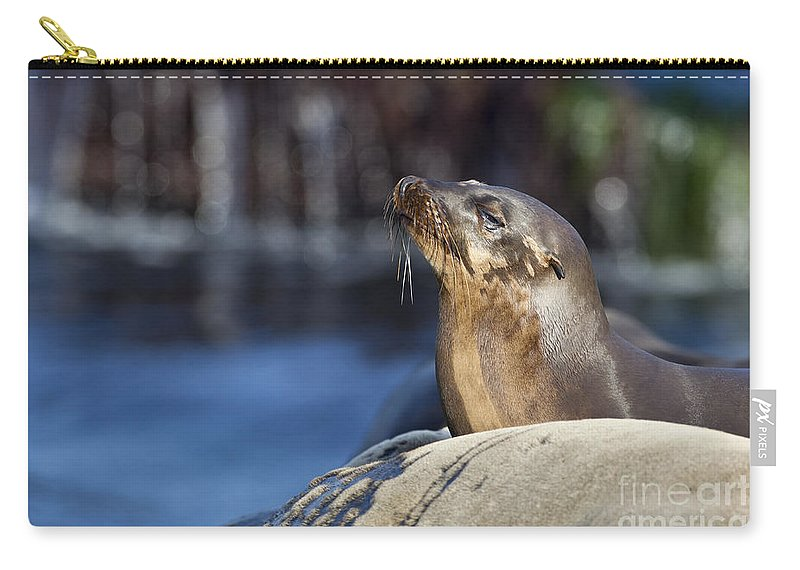 Sea Lion Carry-all Pouch featuring the photograph Sea Lion Resting by Bryan Keil