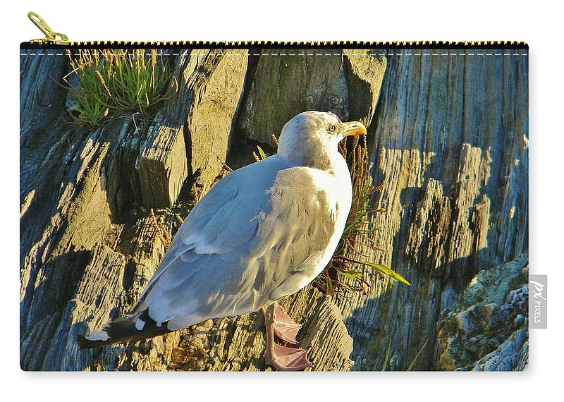Seagull Carry-all Pouch featuring the photograph Seagull In Shadow by Jean Goodwin Brooks