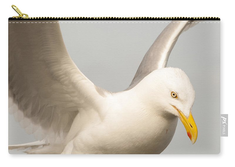 Seagull Carry-all Pouch featuring the photograph Seagull Landing by Steven Natanson