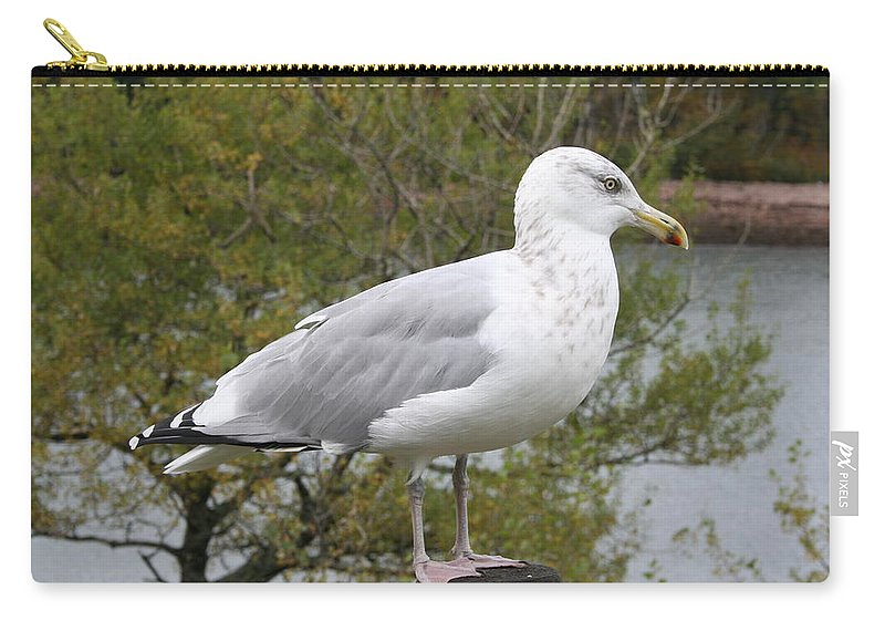 Seagull Carry-all Pouch featuring the photograph Seagull Outlook by Christiane Schulze Art And Photography