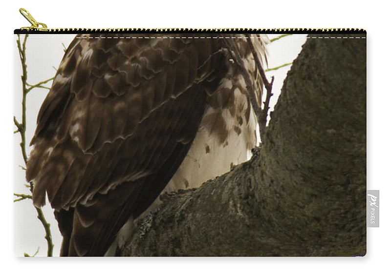 Raptor Carry-all Pouch featuring the photograph Searching by Crystal Heitzman Renskers