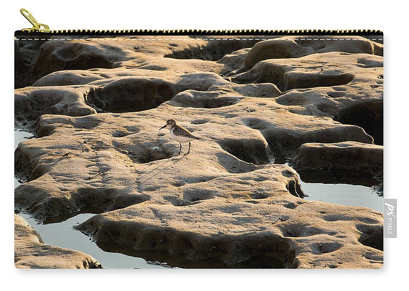 Sea Carry-all Pouch featuring the photograph Searching by John Daly