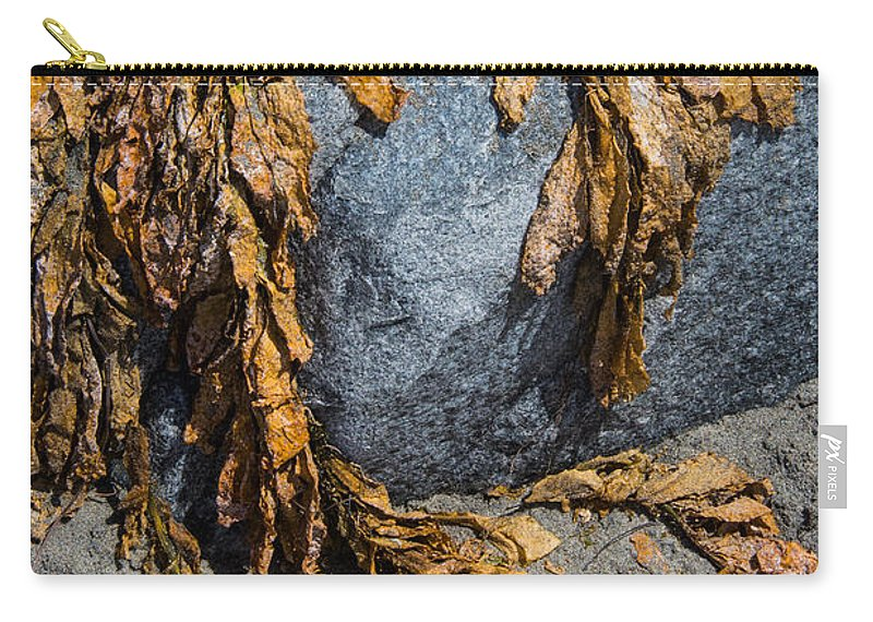 Cindy Tiefenbrunn Carry-all Pouch featuring the photograph Seaweed On The Rock by Cindy Tiefenbrunn