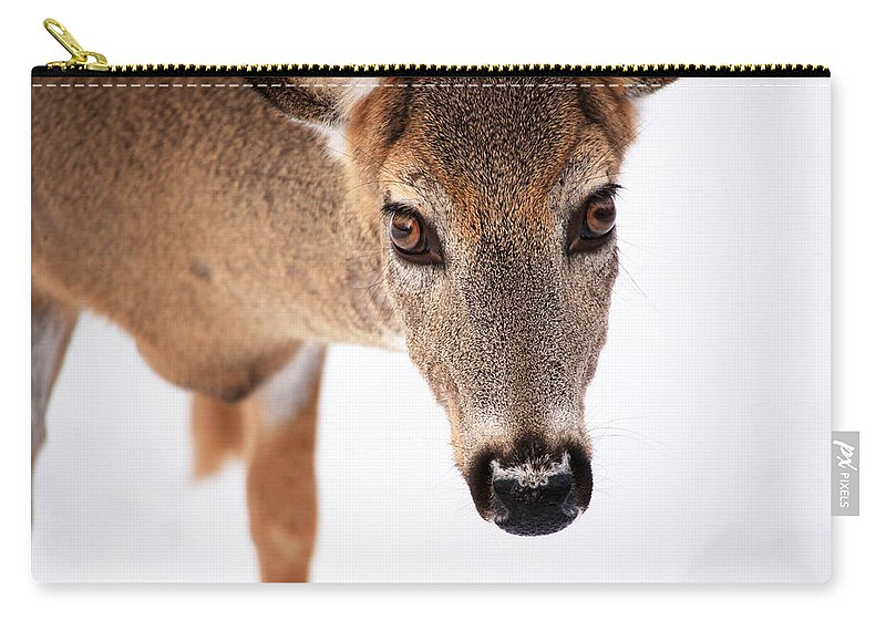 Deer Carry-all Pouch featuring the photograph Seeing Into The Eyes by Karol Livote