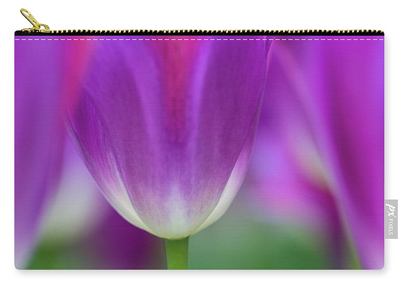 Purple Carry-all Pouch featuring the photograph Selective Focus On Tulip Kuekenhof by Darrell Gulin