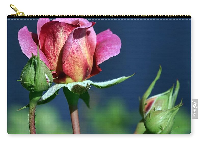 Pink Carry-all Pouch featuring the photograph September Rose by Nikolyn McDonald