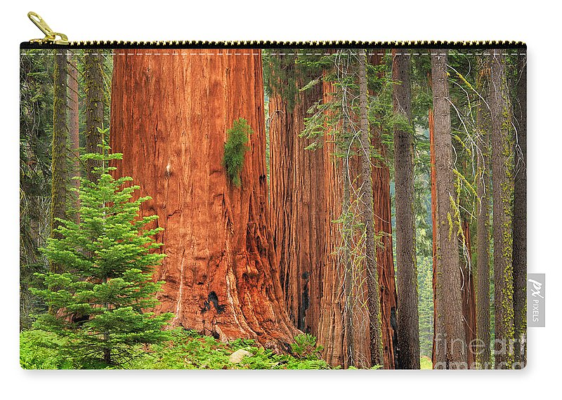 America Carry-all Pouch featuring the photograph Sequoias by Inge Johnsson
